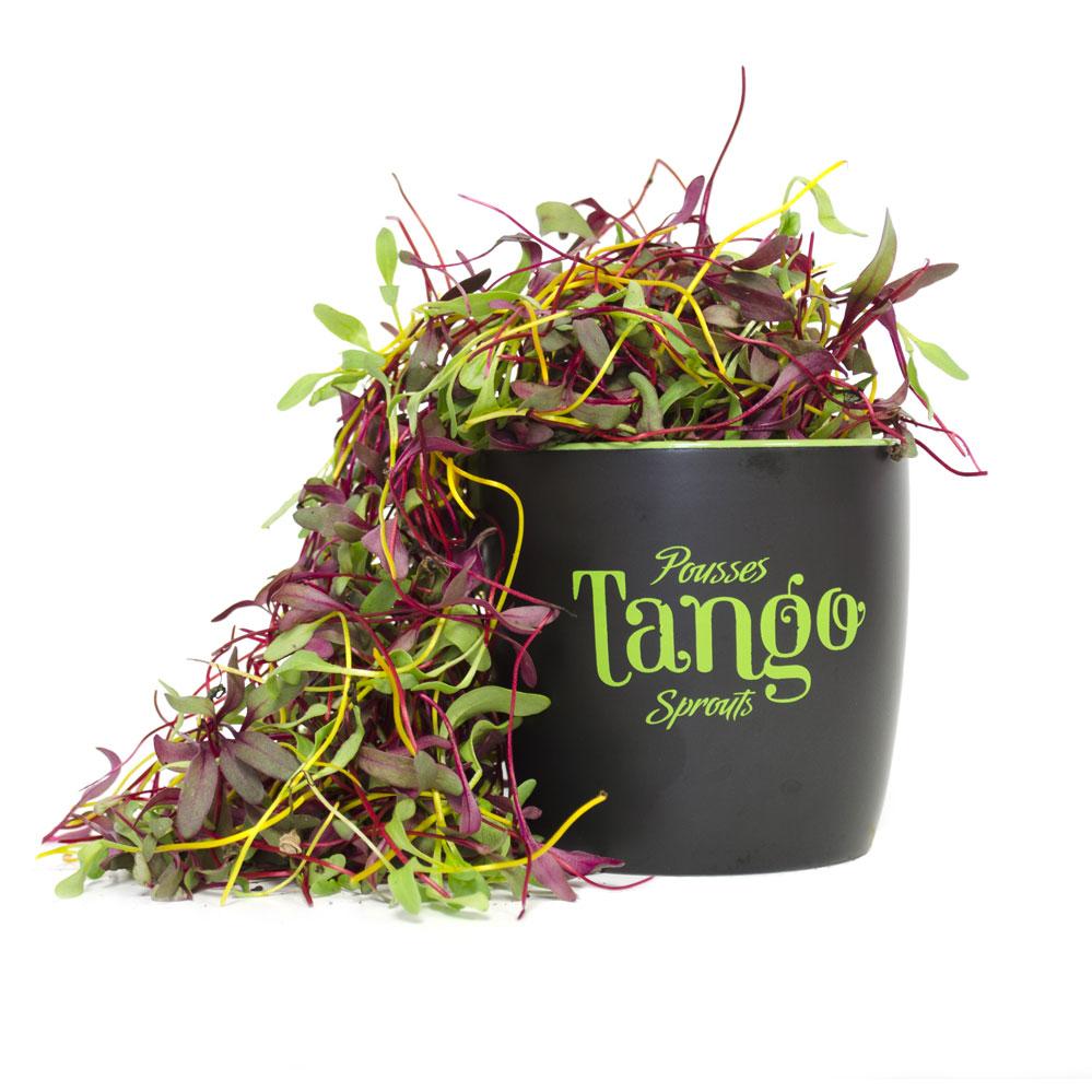 ango-pousses-vegetales-commestibles-bettrave-fuzion