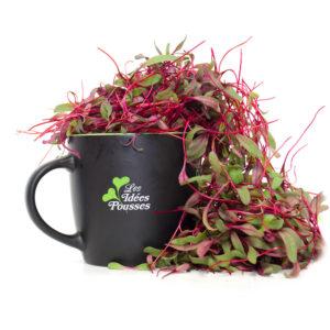 pousses-tango-pousses-vegetales-commestibles-bettrave-rouge