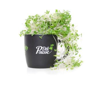 pousses-tango-pousses-vegetales-commestibles-brocoli