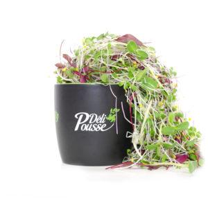 pousses-tango-pousses-vegetales-commestibles-deli-mixe