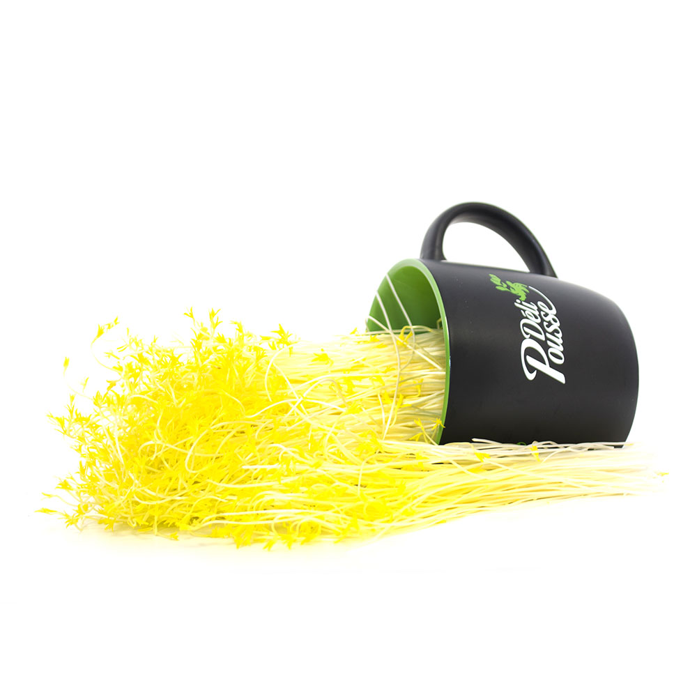 pousses-tango-pousses-vegetales-commestibles-lentilles-jaunes