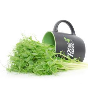 pousses-tango-pousses-vegetales-commestibles-pois
