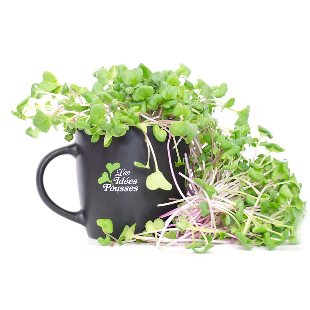 pousses-tango-pousses-vegetales-commestibles-radis-rose